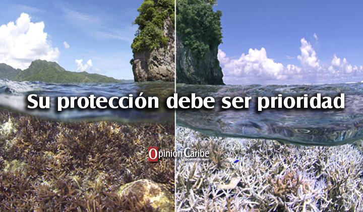 78fe804acbda En riesgo 60 % de los arrecifes de coral - Opinion Caribe